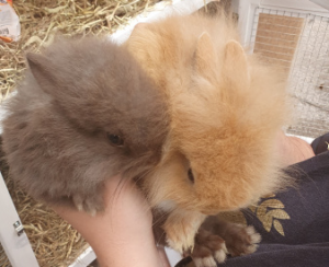 Therapy bunnies